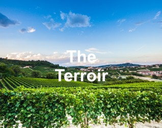 THE TERROIR