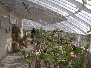 expo à Courson pour la fete des plantes
