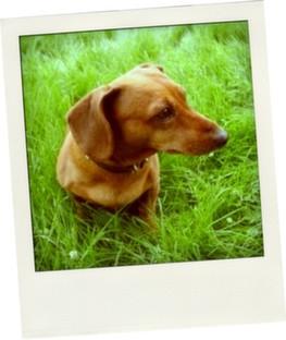 Dog Walker Crouch End Highgate