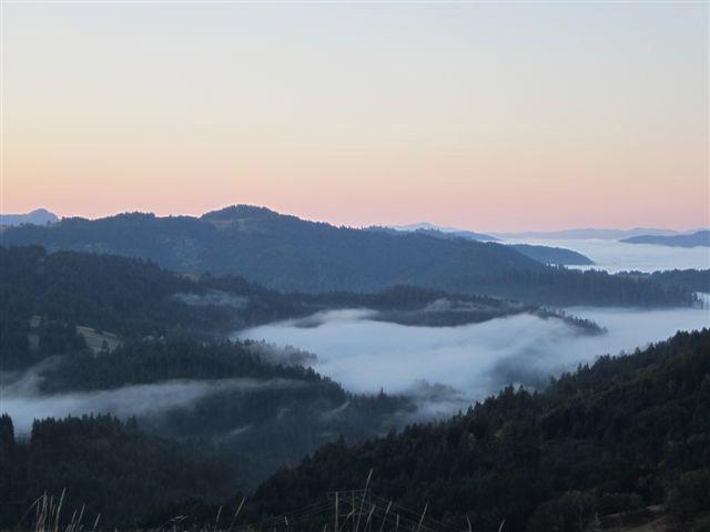 fog in Humboldt