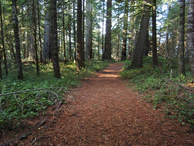 A path in the woods, Humboldt County, California