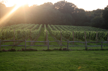 Blackboys vineyard